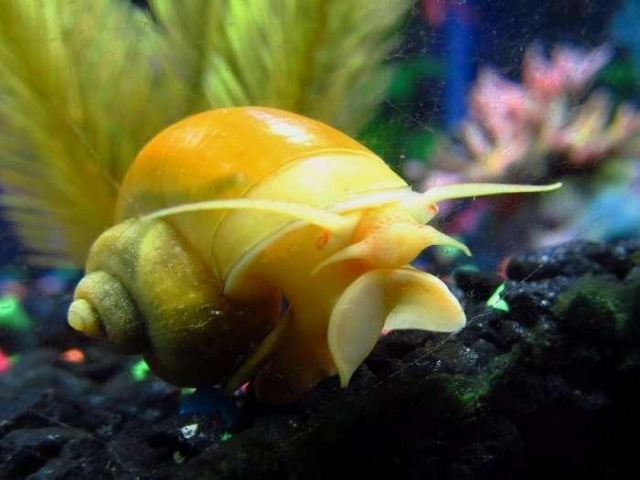 Представители фауны, которым природа подарила золотой окрас