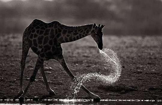 Мир дикой природы глазами Стива Блума