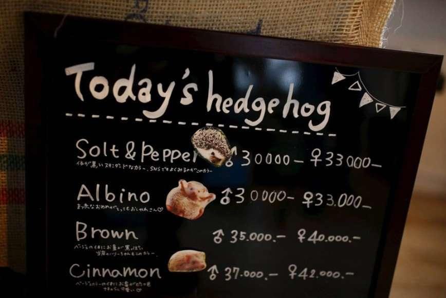 В Токио открылось кафе с ежиками
